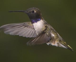 Flutter Color